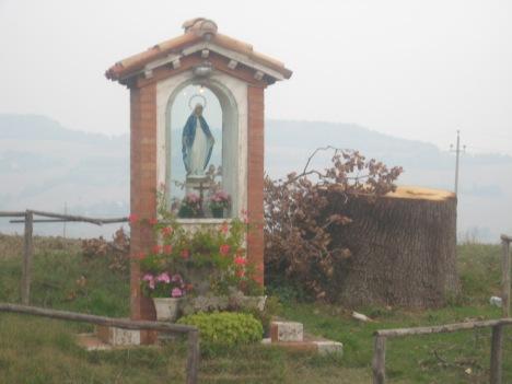 Per l'albero centenario di via Chiaravallese, la legge è arrivata in ritardo