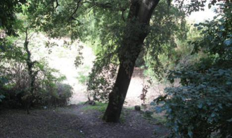 Albero centenario ( a rischio ) nei pressi di Fonte Magna