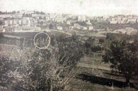 San Carlo 8569